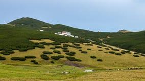 Att krypa sörjer på Bucegi bergplatå royaltyfria bilder