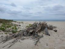 Att lat lugna eftermiddag p? stranden paradis arkivbild