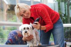 Att le den blonda kvinnan är att ansa en vit maltese hund Royaltyfri Fotografi