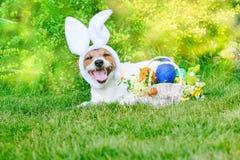 Att ligga på gräshund som den lyckliga kaninen som är klar för påsken Pascha, ståtar arkivbild