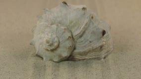 Att att närma sig av snäckskalet som ligger på den utgående sanden, fodrar stock video