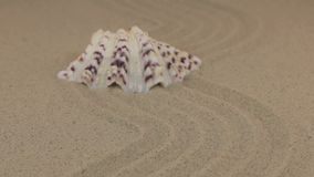 Att närma sig ett härligt snäckskal som ligger på en krabb sand stock video