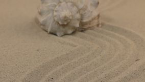 Att närma sig ett härligt snäckskal som ligger på en krabb sand lager videofilmer