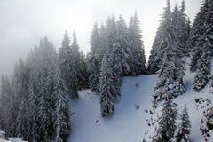 Att omge för dimma sörjer träd som täckas med snö Royaltyfria Foton
