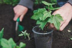 Att att plantera ett träd Personen planterar ett träd Royaltyfri Foto