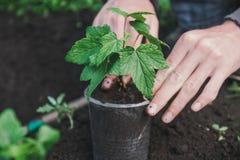 Att att plantera ett träd Personen planterar ett träd Arkivfoton