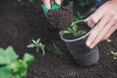 Att att plantera ett träd Personen planterar ett träd Royaltyfri Fotografi