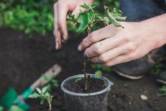 Att att plantera ett träd Personen planterar ett träd Royaltyfri Bild