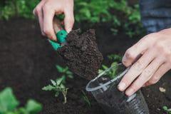 Att att plantera ett träd Personen planterar ett träd Fotografering för Bildbyråer