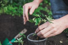 Att att plantera ett träd Personen planterar ett träd Arkivfoto