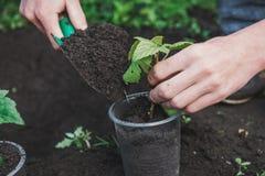 Att att plantera ett träd Personen planterar ett träd Royaltyfria Bilder