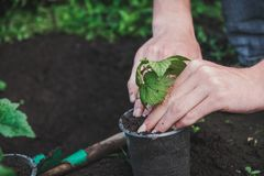 Att att plantera ett träd Personen planterar ett träd Royaltyfria Foton