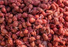 Att plantera potatisar behandlade med gift från den colorado skalbaggen Trädgård fotografering för bildbyråer