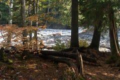 Att rasa på vapnet av klippan lågt faller, den Tahquamenon floden, Michigan, USA Royaltyfri Fotografi