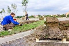 Att rulla ut gräs som applicerar torva, rullar för en ny gräsmatta Fotografering för Bildbyråer