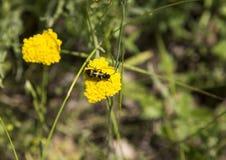 Att samla polen Arkivbild