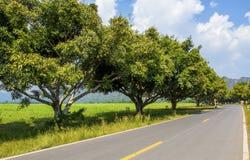 Att se ner ett träd fodrade vägen in i avståndet Arkivbild
