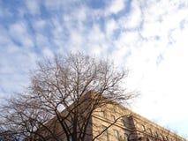 Att se upp på byggnadsfasaden och gör bar vinterträd arkivbild