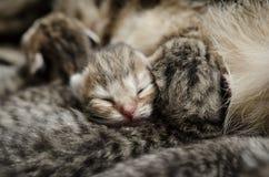 Att sova behandla som ett barn kattungen Royaltyfria Foton