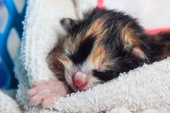 Att sova behandla som ett barn kattungen Arkivbilder