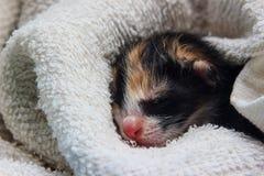 Att sova behandla som ett barn kattungen Arkivbild