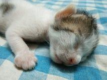 Att sova behandla som ett barn Kitten Closeup Face Picture royaltyfria foton