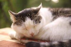 Att sova för katt ta sig en tupplur på sommarträdgårdbakgrunden Royaltyfria Bilder
