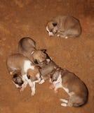 Att sova hunden behandla som ett barn Arkivfoto