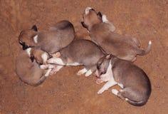 Att sova hunden behandla som ett barn Royaltyfri Fotografi