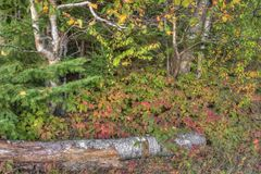 Att sova jätten är ett stort provinsiellt parkerar på den Lake Superior norden av Thunder Bay i Ontario royaltyfri foto
