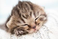 Att sova som är nyfött, behandla som ett barn kattungen Fotografering för Bildbyråer