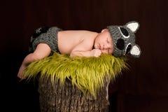 Att sova som är nyfött, behandla som ett barn pojken som ha på sig en Raccoondräkt Arkivfoton