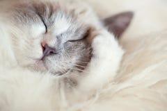 Att stänga sig för kattsömnar tafsar Arkivbild