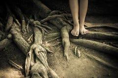 Att stå på ett träd rotar Arkivbild