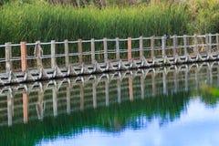 Att sväva strandpromenaden mot gröna cattails reflekterade på stilla wat Arkivfoton