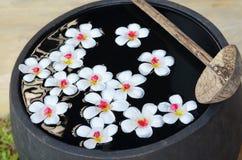 Att sväva templetree blommar på vatten Royaltyfri Bild