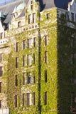 Att täcka för Vines tränga någon av gammalt tegelstenhotell Royaltyfri Bild