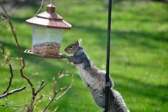 Attaccare un alimentatore dell'uccello Immagini Stock Libere da Diritti