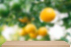 Attaccatura arancio fresca sul fondo di defocus dell'albero con lo scaffale Immagini Stock Libere da Diritti