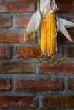 Attaccatura del cereale fotografia stock