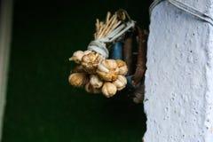 Attaccatura della treccia dell'aglio fotografia stock