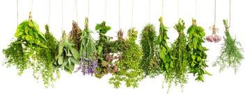 Attaccatura delle piante aromatiche isolata su bianco Ingredienti di alimento Fotografia Stock