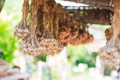 Attaccatura organica dell'erba dell'aglio sul bamb? vecchio immagini stock libere da diritti