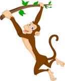 Attaccatura sveglia della scimmia Fotografia Stock Libera da Diritti