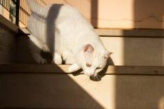 Attacco del gatto Fotografia Stock