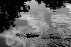 Attacco dell'alligatore! Fotografie Stock Libere da Diritti
