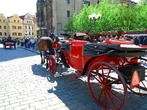 Attached horses at Prague`s Old Town Square Royalty Free Stock Images