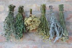 Attachement des herbes sèches Images stock