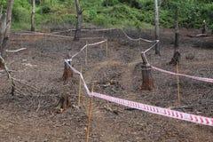 Attachez du ruban adhésif à la ligne dans une jungle Image libre de droits