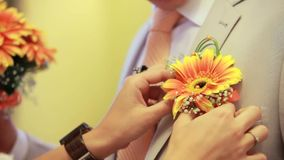 Attaching Boutonniere. Women's hands are inserted into the jacket pocket of the man's boutonniere gerbera orange stock footage
